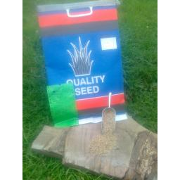 grass seed1.jpg