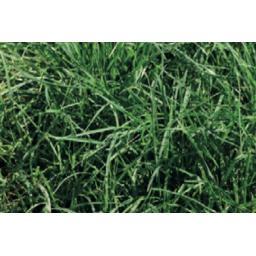 Premium_Grass_Mix.jpg